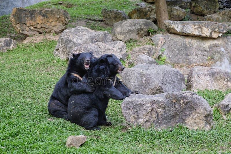 Abraço de urso fotografia de stock royalty free