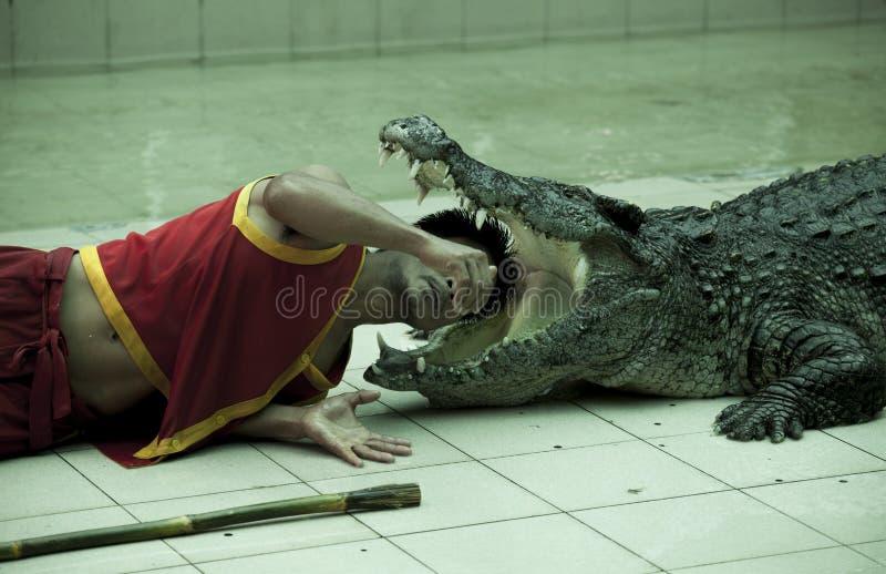 Abra as maxilas de um crocodilo enorme, instrutor põe sua cabeça na boca de um predador perigoso Jardim zoológico de Tailândia Ph fotografia de stock royalty free