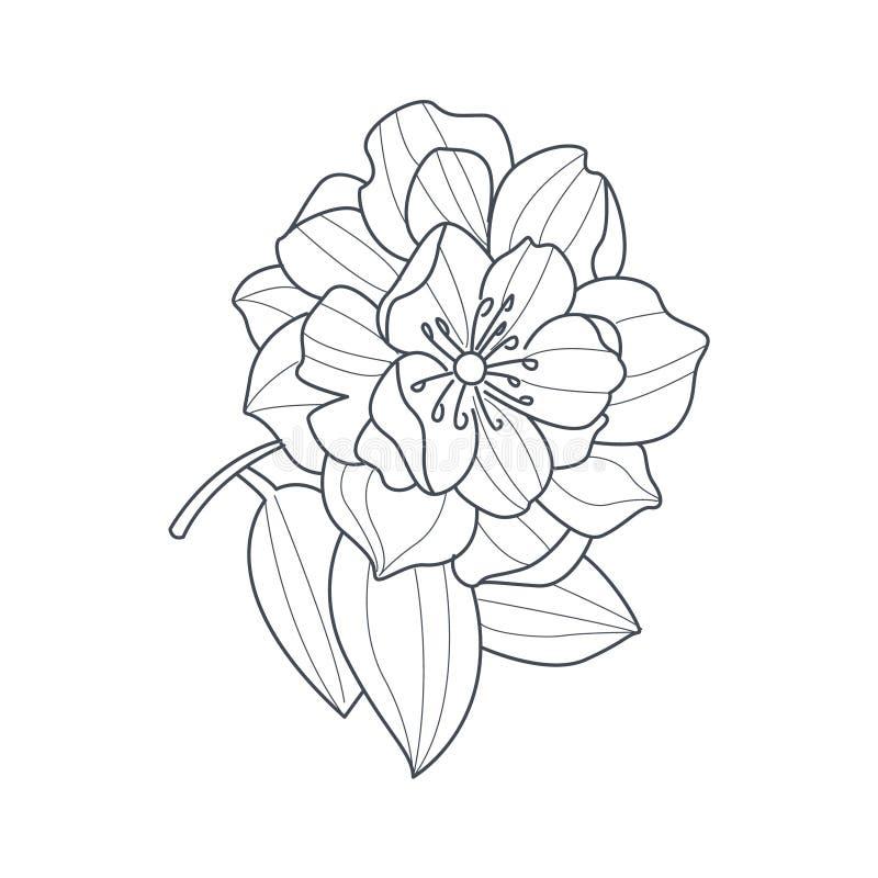 Abra completamente el dibujo monocromático de la flor de la peonía para el libro de colorear libre illustration