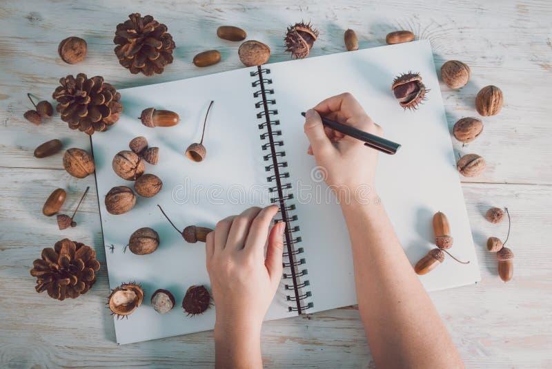 Abra el cuaderno con las bellotas y los conos foto de archivo