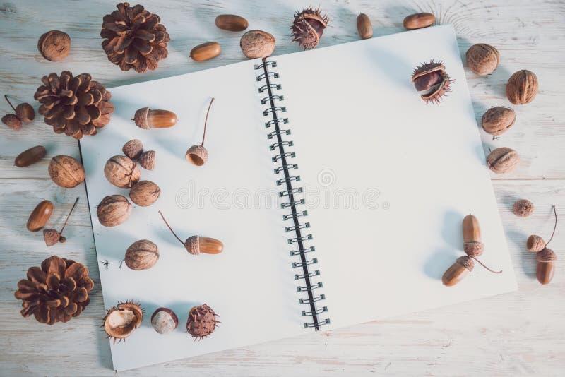 Abra el cuaderno con las bellotas y los conos imágenes de archivo libres de regalías