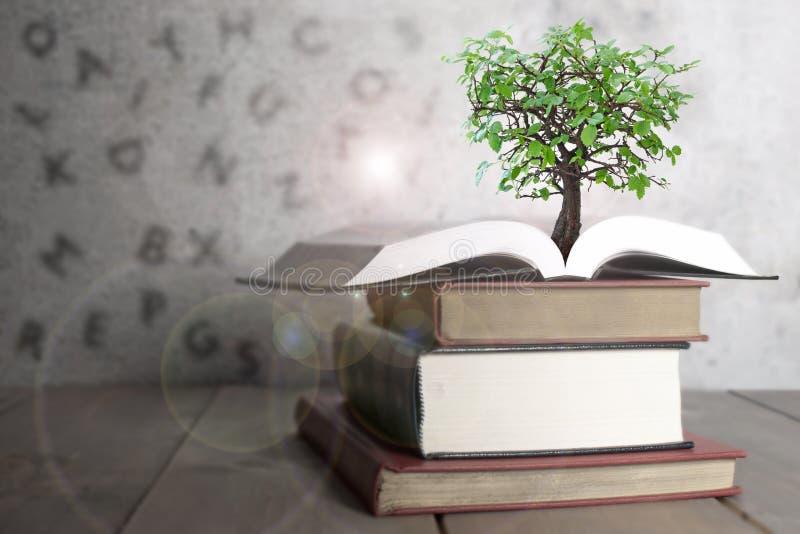 Abra el libro con el árbol imagen de archivo libre de regalías
