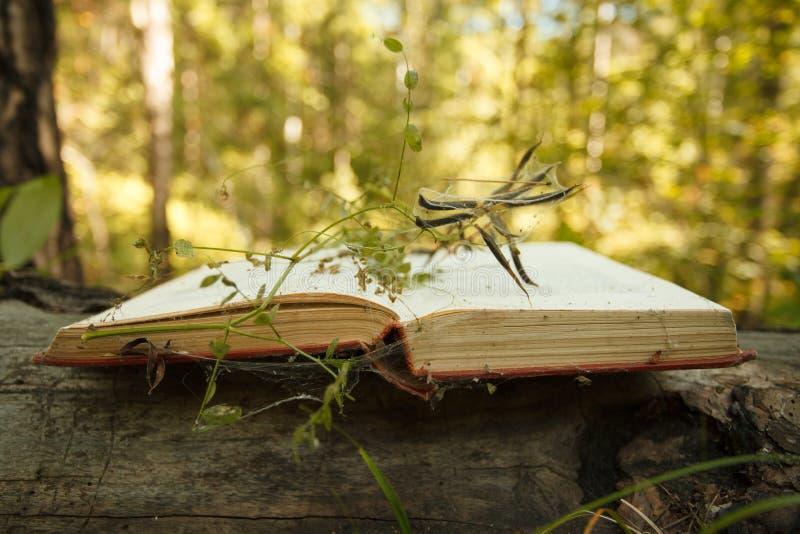 Abra el libro en fondo de madera con efecto mágico del bokeh de la planta del misterio en el fondo fotografía de archivo libre de regalías