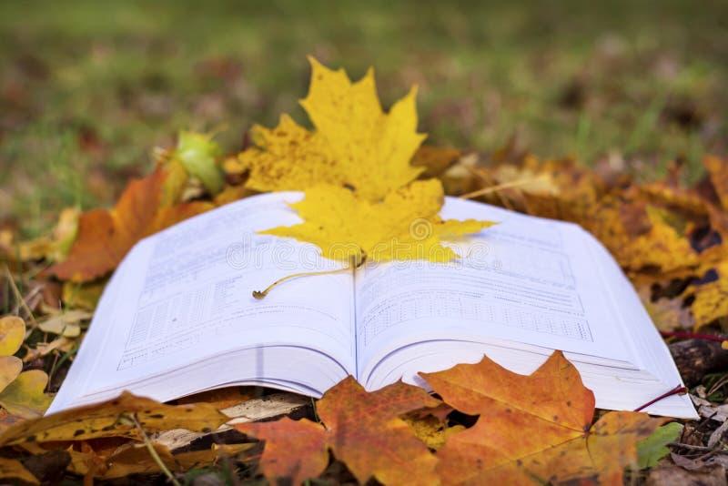 Abra el libro en un jardín del otoño foto de archivo libre de regalías