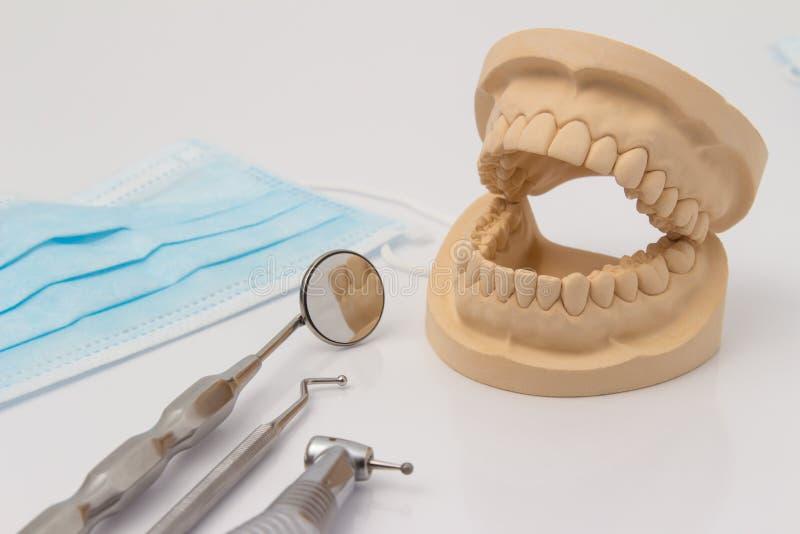 Abra el molde dental de dientes con los instrumentos foto de archivo libre de regalías