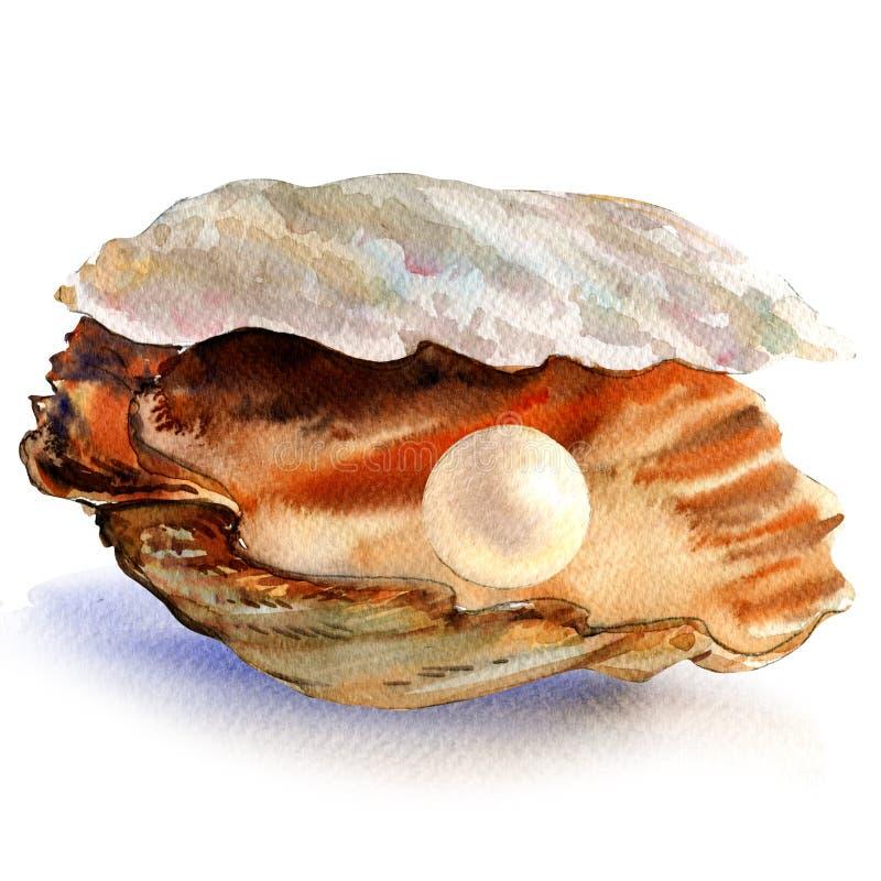 Abra la cáscara de ostra con la perla blanca hermosa aislada, ejemplo de la acuarela ilustración del vector