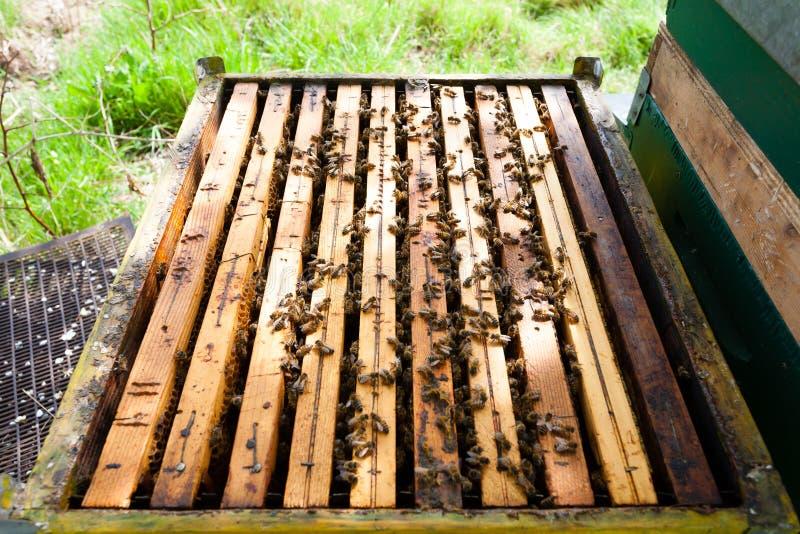 Abra la colmena, apicultura imagenes de archivo