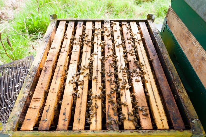Abra la colmena, apicultura fotografía de archivo libre de regalías