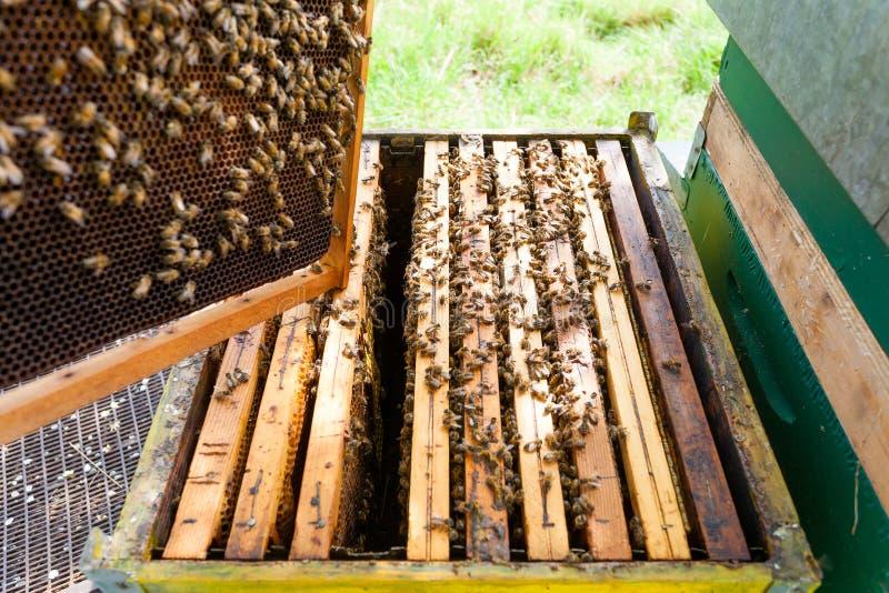 Abra la colmena, apicultura imagen de archivo libre de regalías