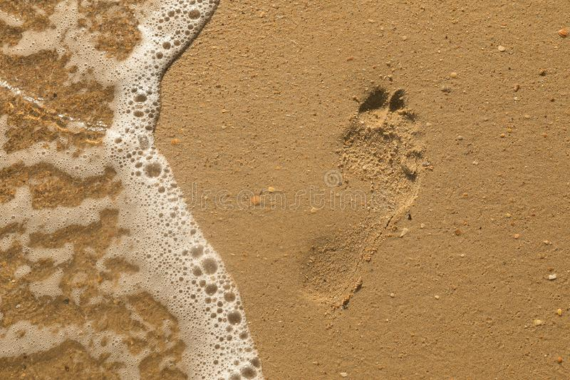 Abra la concha marina en un Pebble Beach salpicado por las resacas de un mar fotografía de archivo