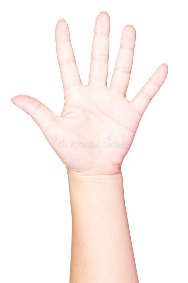 Abra la mano de la mujer en el fondo blanco fotografía de archivo libre de regalías