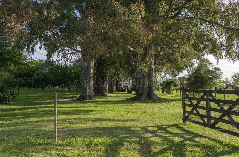 Abra la puerta del tranquera en un campo en la Argentina, Argentina fotografía de archivo libre de regalías