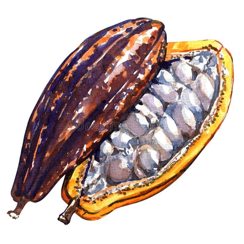 Abra la vaina del cacao en un fondo blanco stock de ilustración