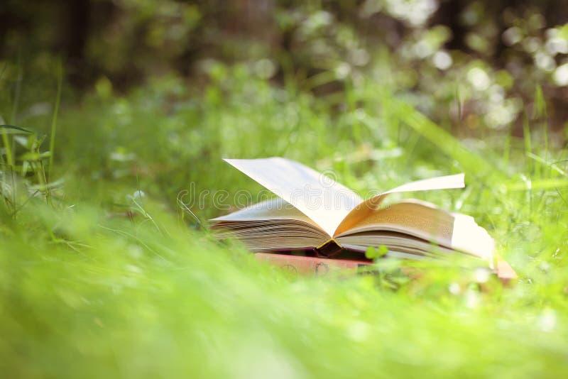 Abra los libros al aire libre El conocimiento es potencia Reserve en un libro del bosque en un tocón imagenes de archivo