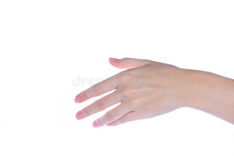 Abra a mão da mulher no fundo branco foto de stock