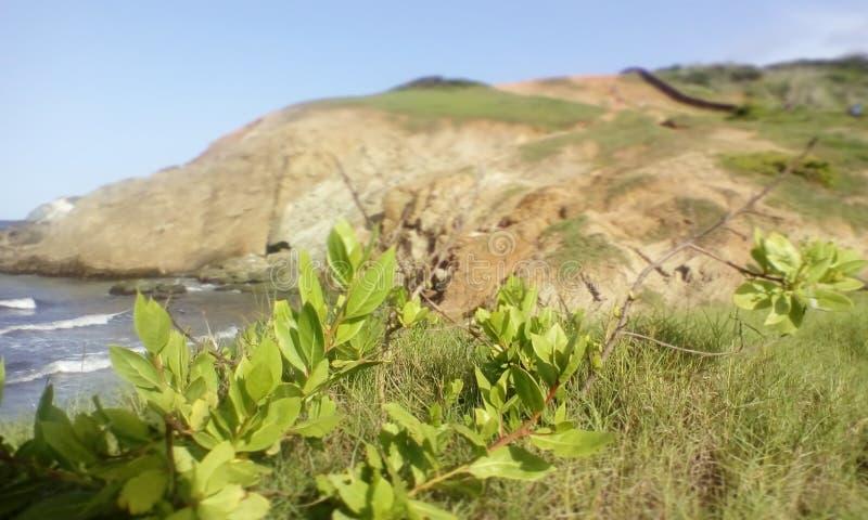 Abra o campo coberto com as flores onde você pode ver o mar fotografia de stock royalty free