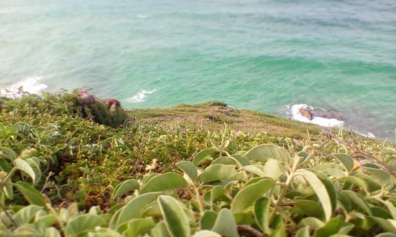 Abra o campo coberto com as flores onde você pode ver o mar imagens de stock