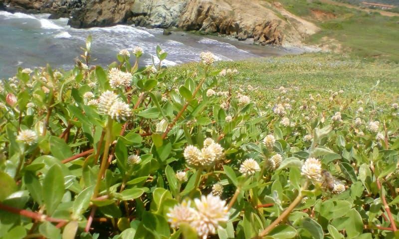Abra o campo coberto com um Buch das flores fotos de stock royalty free