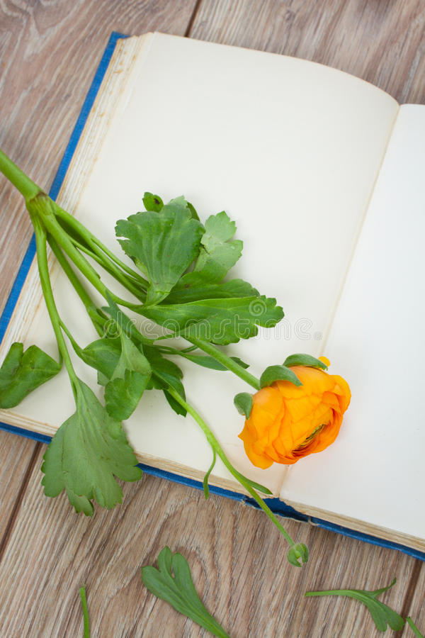 Abra o livro com flor imagem de stock