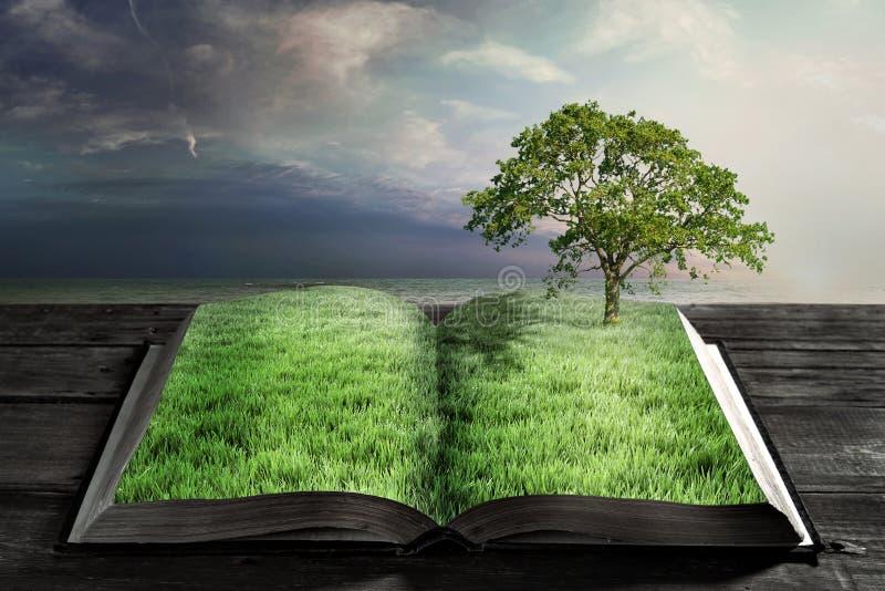 Abra o livro com grama verde foto de stock