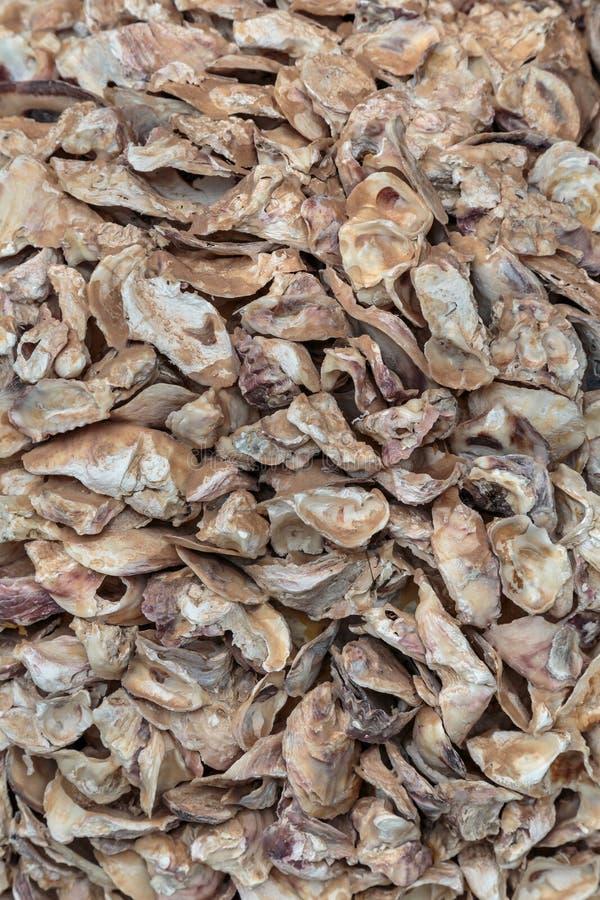 Abra o shell de ostra na praia, Normandy, França imagem de stock royalty free