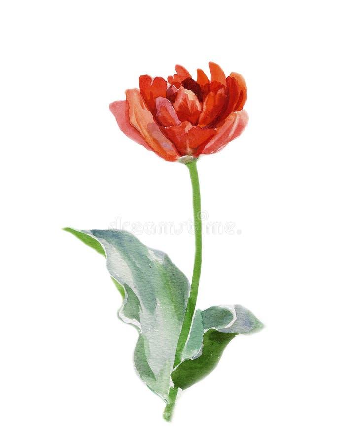 Abra o tulip ilustração stock