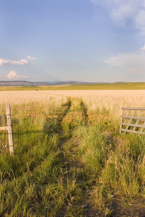 Abra a porta a um campo com céus desobstruídos e uma vertente pequena imagem de stock royalty free
