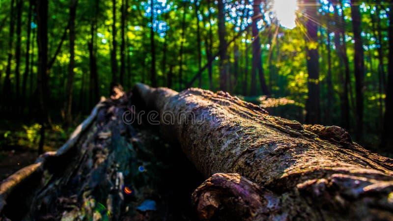 Abra una sesión el bosque foto de archivo libre de regalías