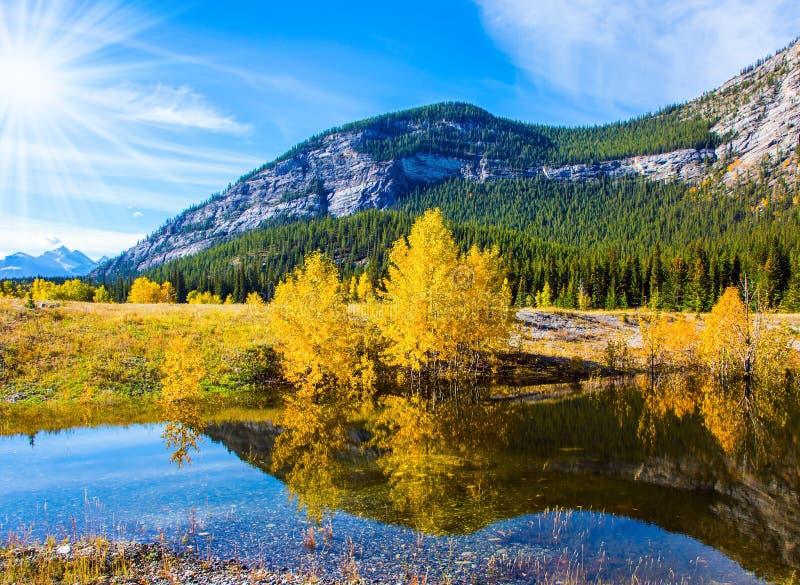 Abraham jezioro odbija złotego ulistnienie zdjęcie royalty free