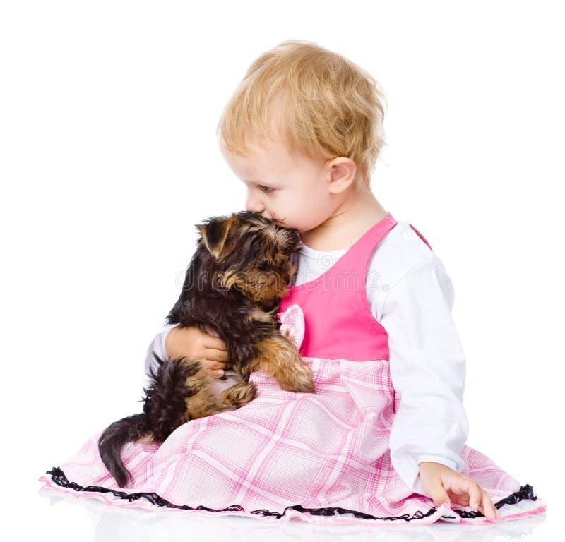 Abrazo de la muchacha un pequeño perrito de Yorkshire Terrier Aislado en blanco fotos de archivo