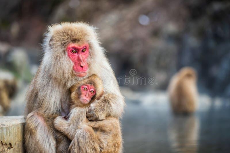 Abrazo del mono de la nieve en el parque de Jigokudani fotos de archivo libres de regalías