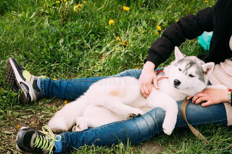 Abrazo joven divertido de la muchacha de Husky Puppy Dog Sits In en hierba verde imagenes de archivo