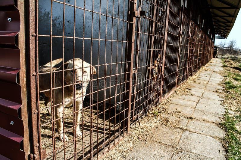 Abri de chien - espoir - cruauté animale photos libres de droits