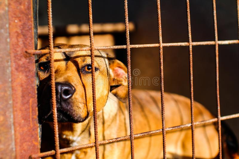 Abri de chien - espoir - regard angélique photographie stock libre de droits