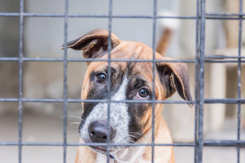 Abri pour les chiens sans abri, attendant un nouveau propriétaire image libre de droits
