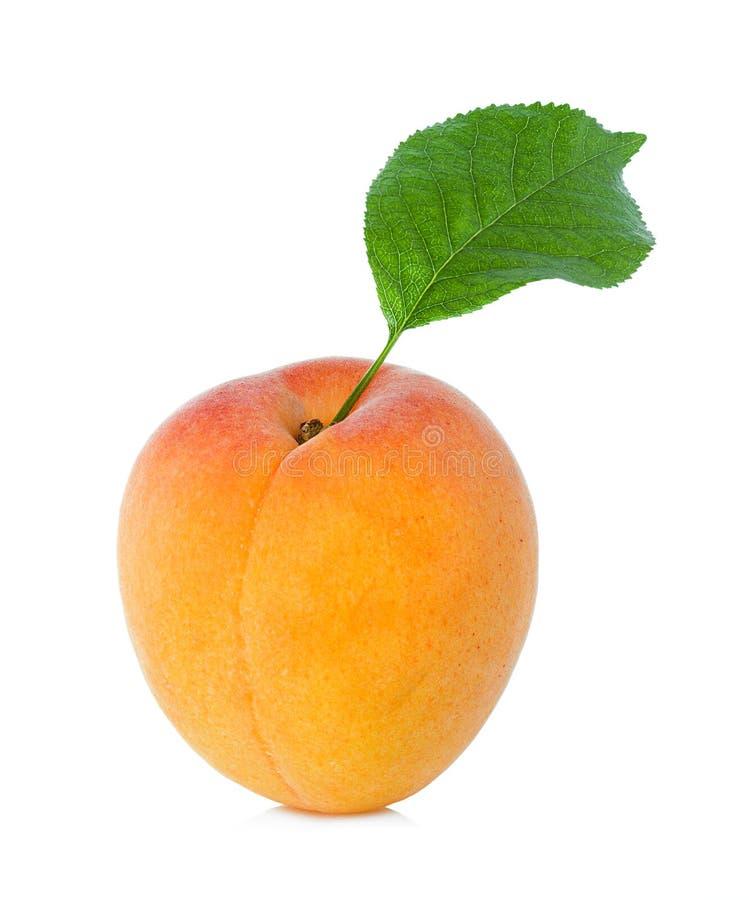 Abricot avec la feuille photo stock