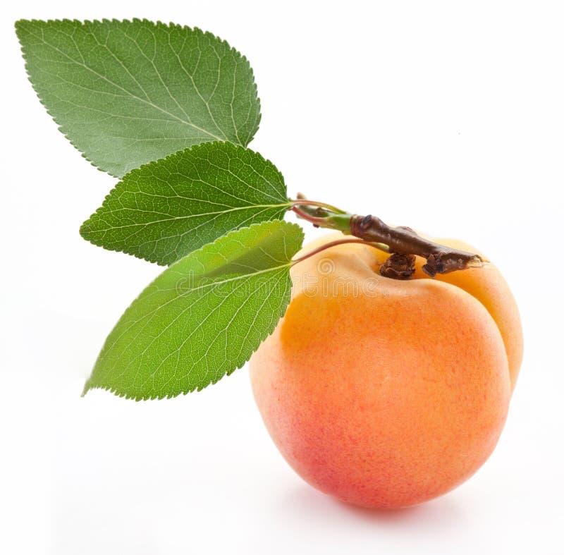 Abricot avec la lame. image libre de droits