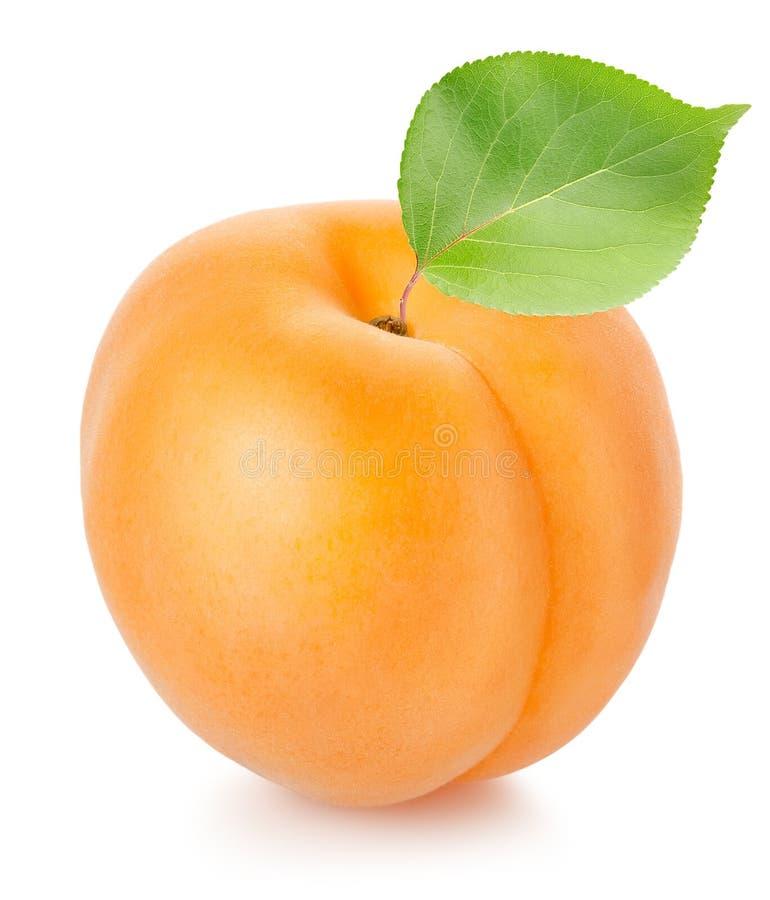 Abricot avec la lame photo stock
