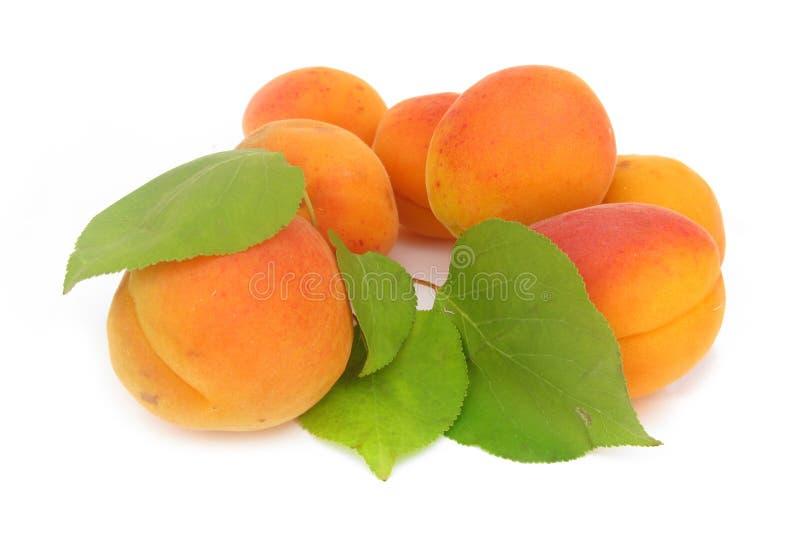 Abricot avec les lames vertes photos stock
