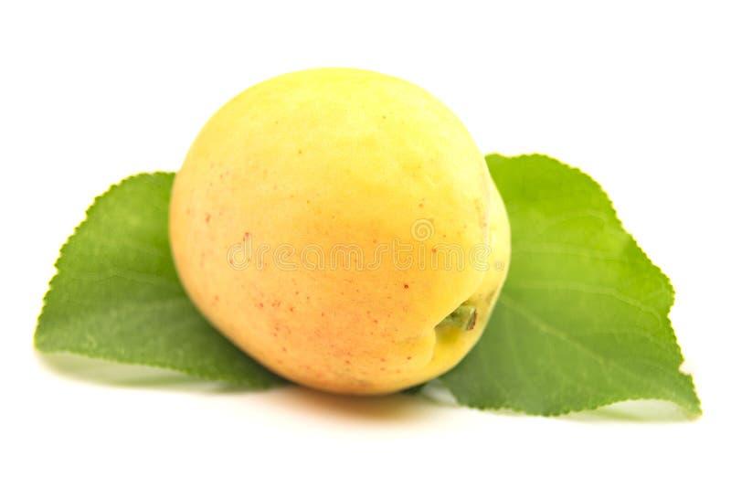Abricot jaune avec la feuille d'abricot sur un fond blanc photographie stock