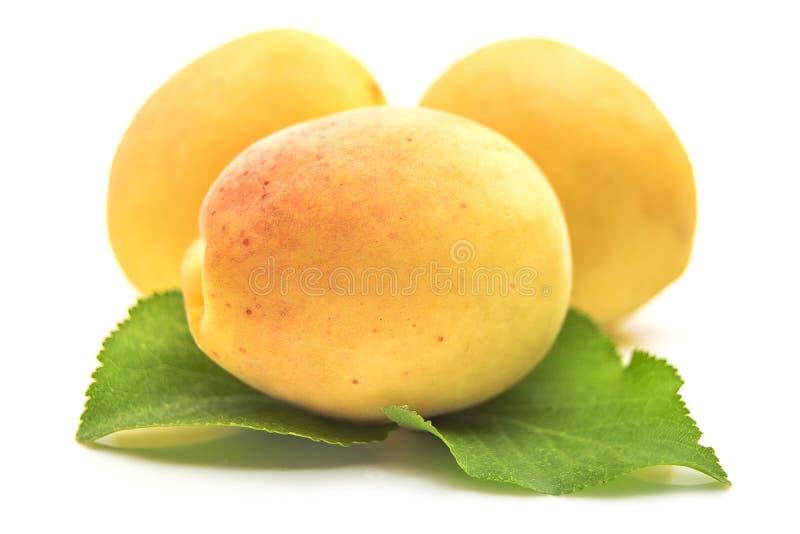 Abricot jaune avec la feuille d'abricot sur un fond blanc photos libres de droits