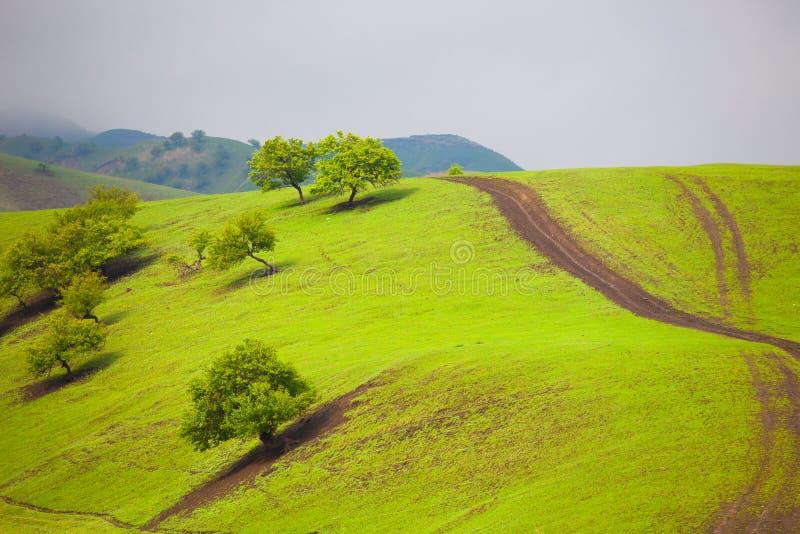 Abricot Vally image stock