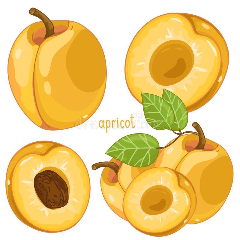 Abricot, vecteur illustration stock