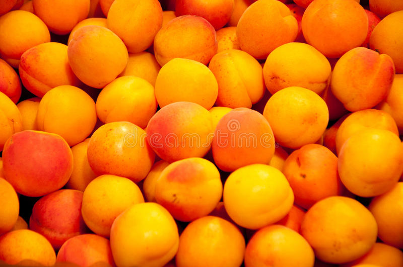 Abricots photographie stock
