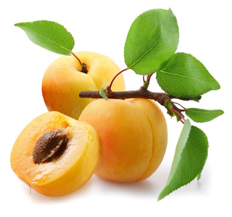 Abricots avec des lames. photographie stock libre de droits