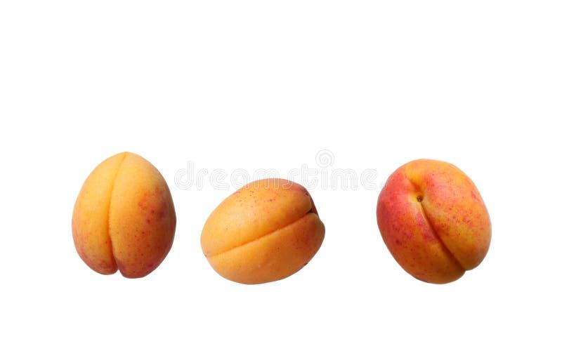Abricots avec des lames image stock
