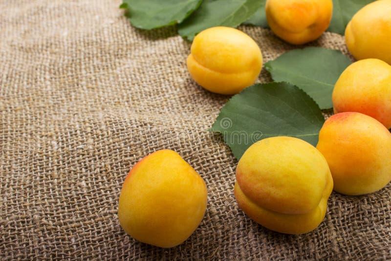 abricots dans une cuvette sur renvoyer le fond photos libres de droits