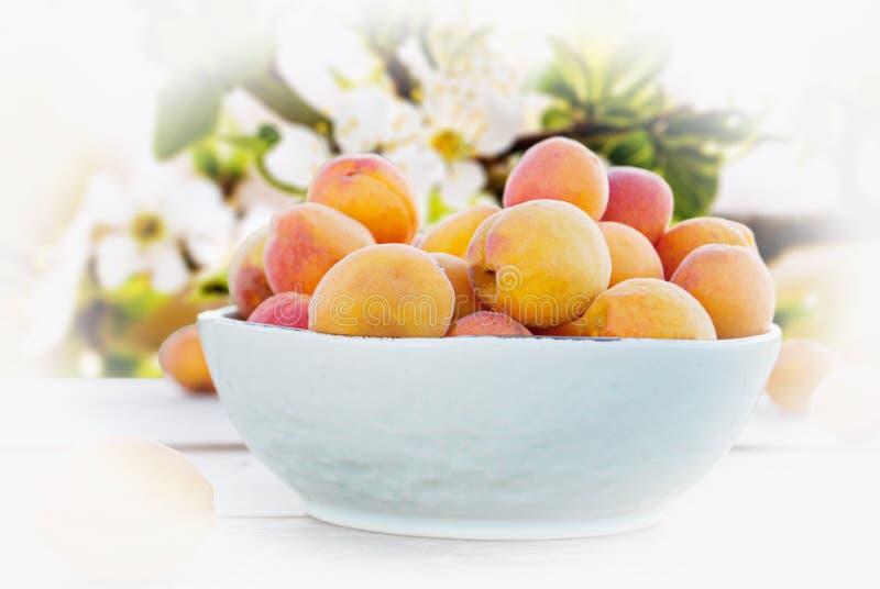 Abricots dans une cuvette sur un fond d'une branche fleurissante images libres de droits