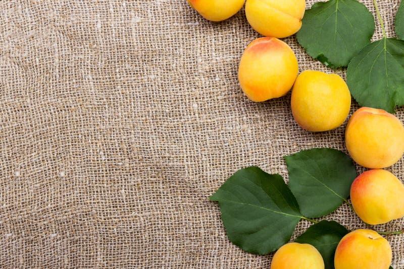 abricots frais sur le sac à toile de jute sur la table photos stock