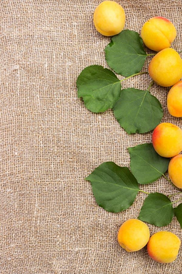 abricots frais sur le sac à toile de jute sur la table photo stock